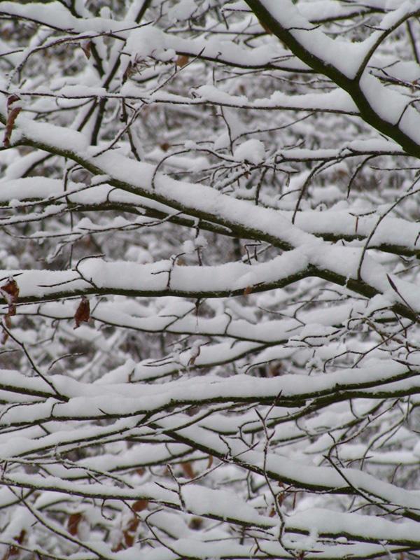 Schneeast